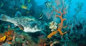 Dive in Menjangan Island -Bali